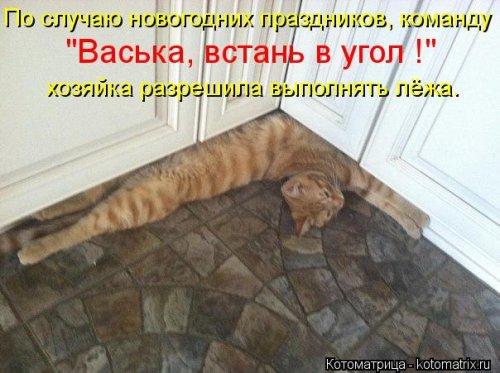 1357839046_novye-kotomatricy-7