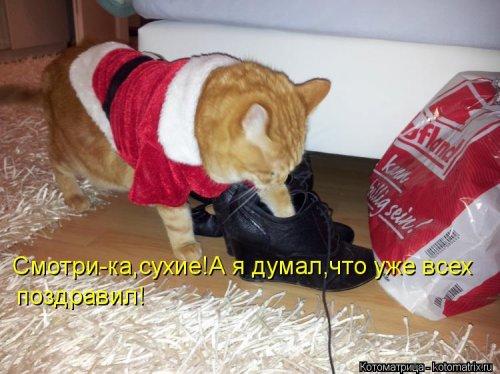 1357839059_novye-kotomatricy-8