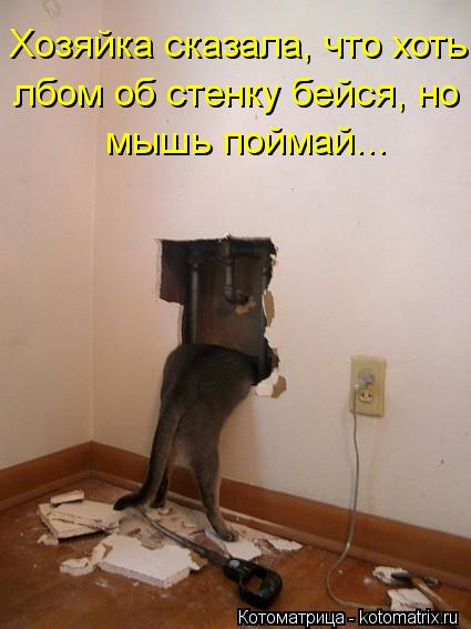 1357839066_novye-kotomatricy-12