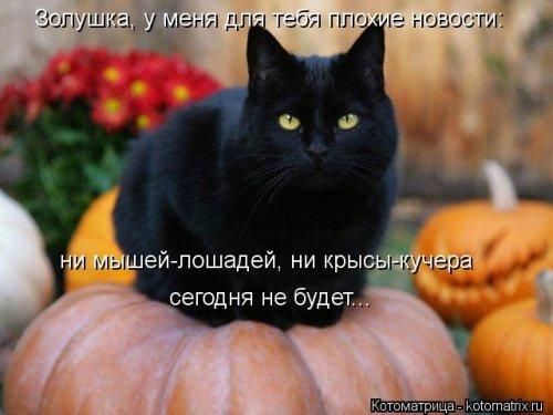 1357839048_novye-kotomatricy-11