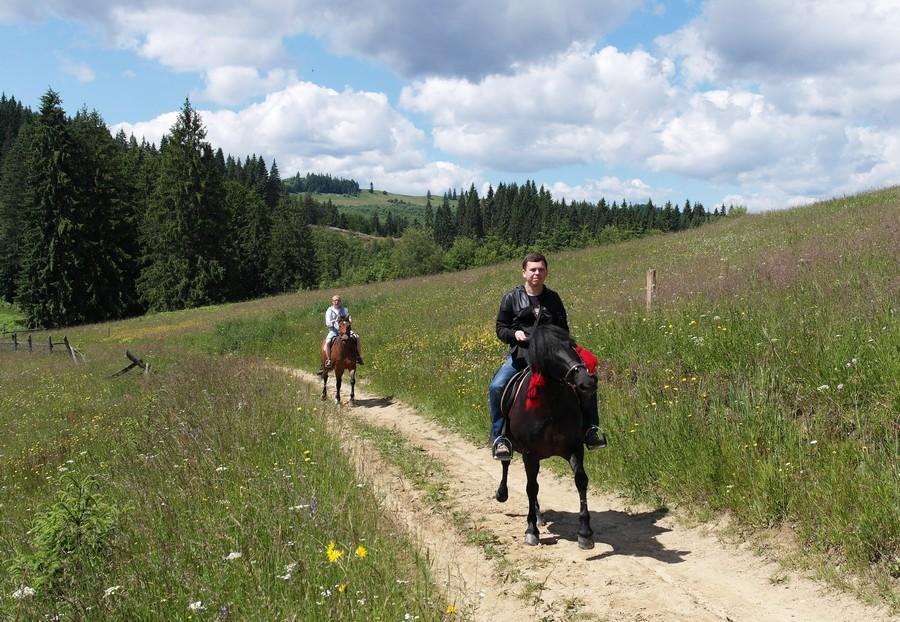 horses-4