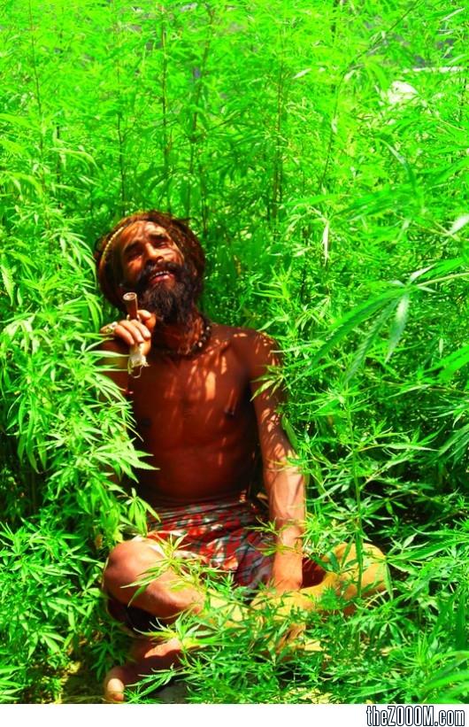 Прикольные картинки травы