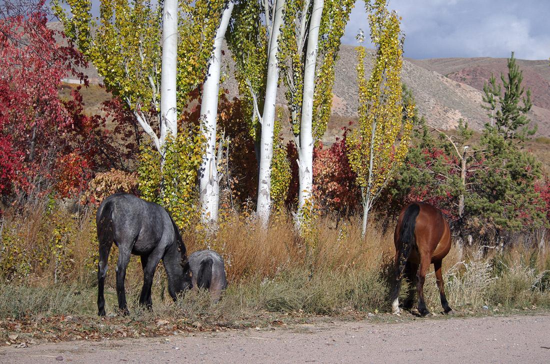 Лошадки попой