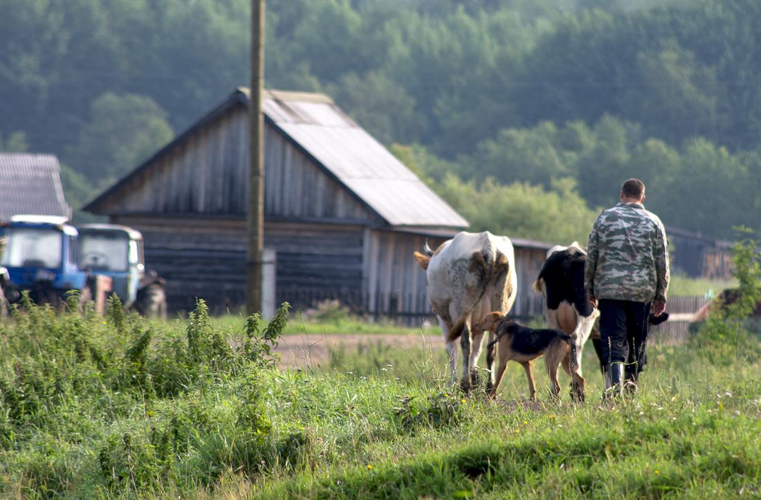Сельская жизнь...