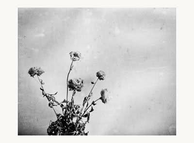 photographis
