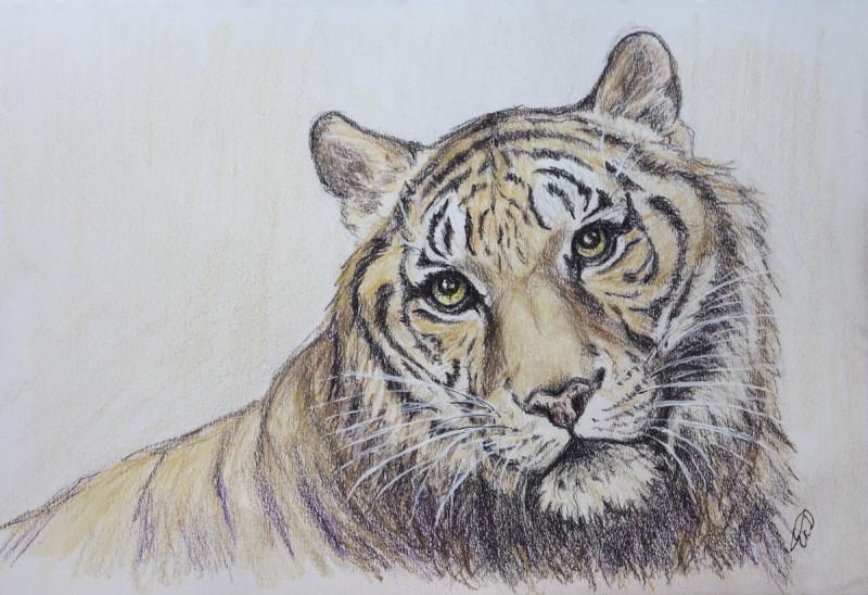 Тигр Мадрас из зоопарка Ишикава. Этому достойному джентльмену исполнилось 22 года