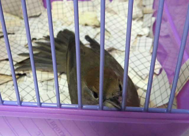 птиц2