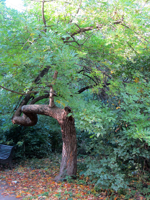 дерево3