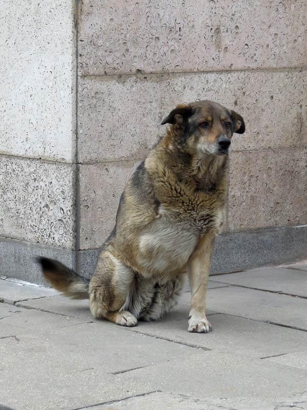 собака-со-стоянки