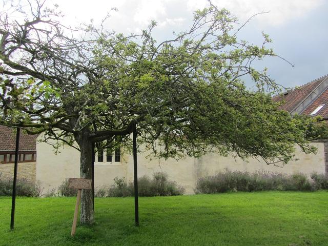 аббатство_дерево