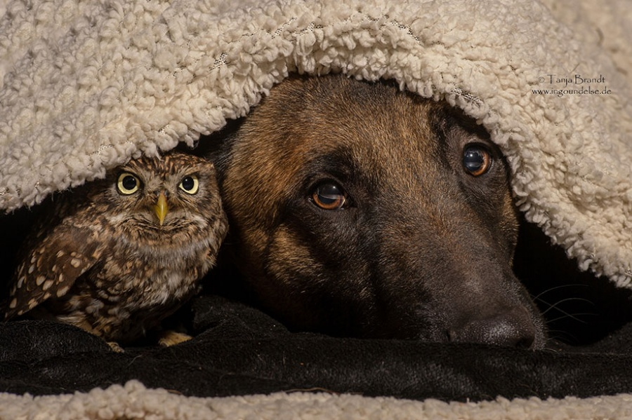 13411660-R3L8T8D-900-ingo-else-dog-owl-friendship-tanja-brandt-10-1