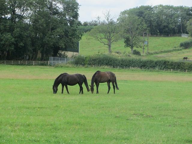 1_кони
