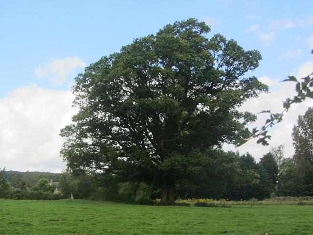 3_дерево