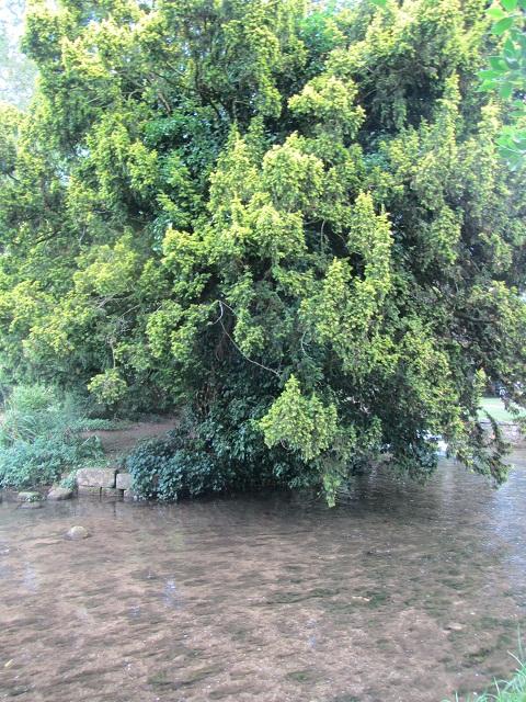 5_дерево