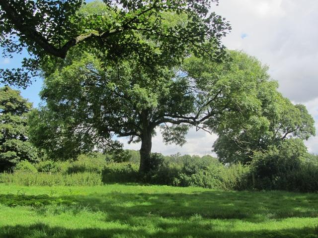 28_дерево