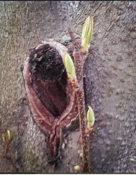 весна-во-дворе