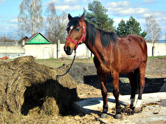 конь1