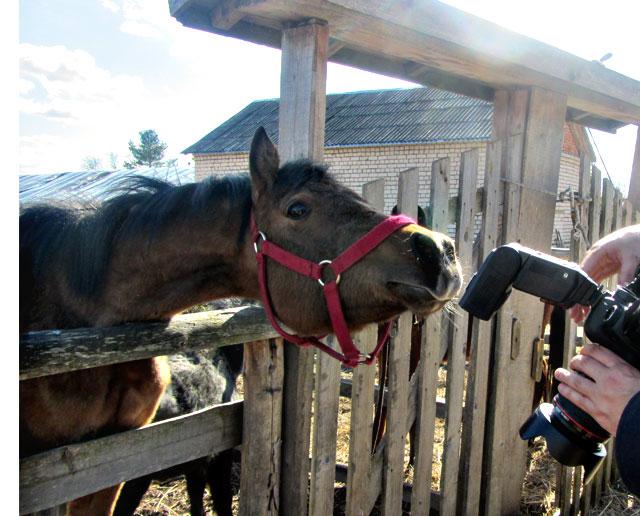 конь-и-фото