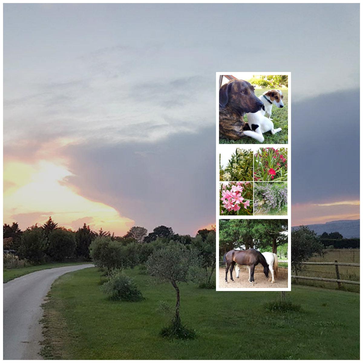 Прованс. Самый счастливый дом. Собаки, лошади, цветы... ВОСТОРГ!