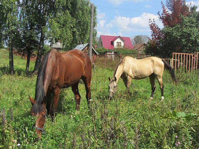 кони-гуляют
