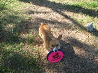 New Frisbee