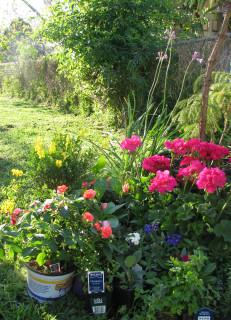 Les Fleurs Galore