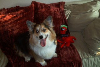 Rocky With Beano & Crawfish