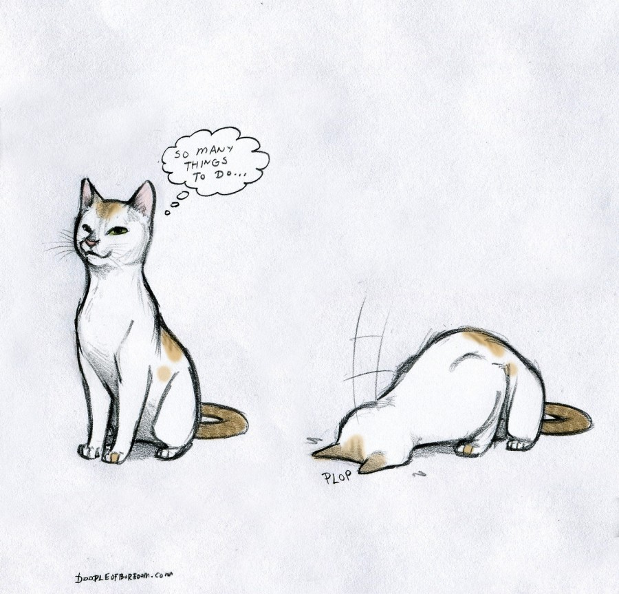 sketch of cat, first sitting up thinking 'so many things to do' then falling forward onto cat falling onto face with 'plop'