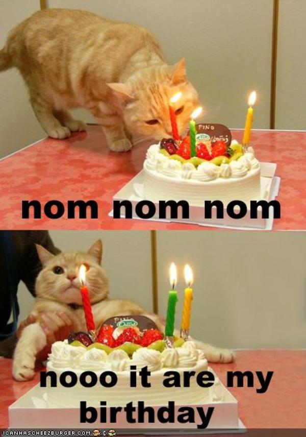 funny-pictures-cat-wants-his-birthday-cake