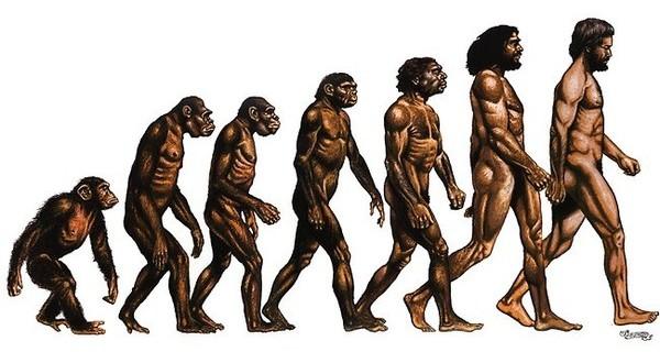 evolitio-600x330