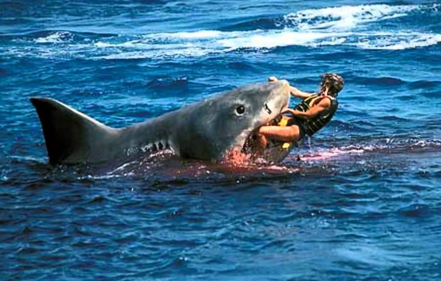 top-10-most-deadly-sharks-to-hum