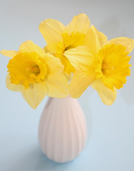 foto flowers
