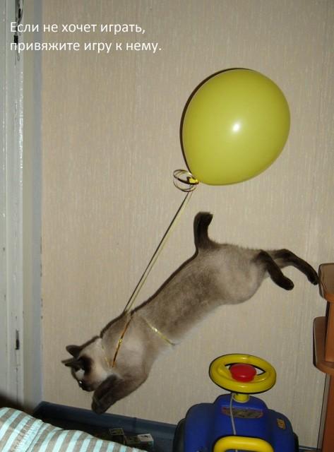 согрей кота