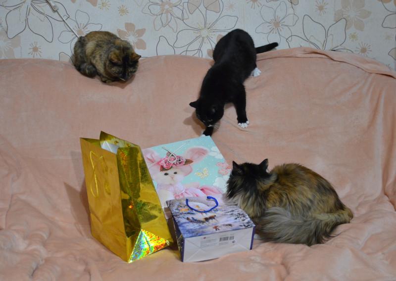 подарочки+кошки
