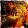 04 autumn icon