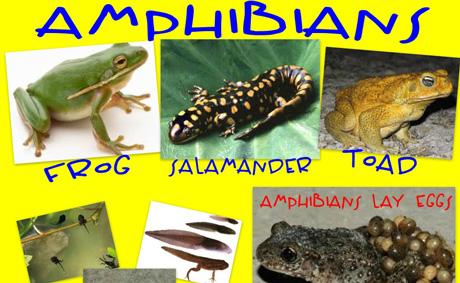 amphibians_collage_01_460
