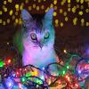 cat-lights-icon