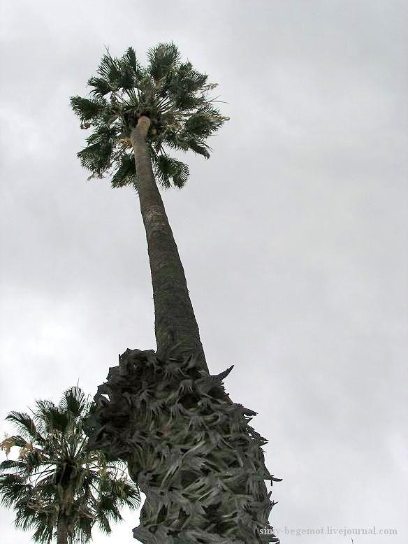 Фото17 Пальмы вонзаются в небо
