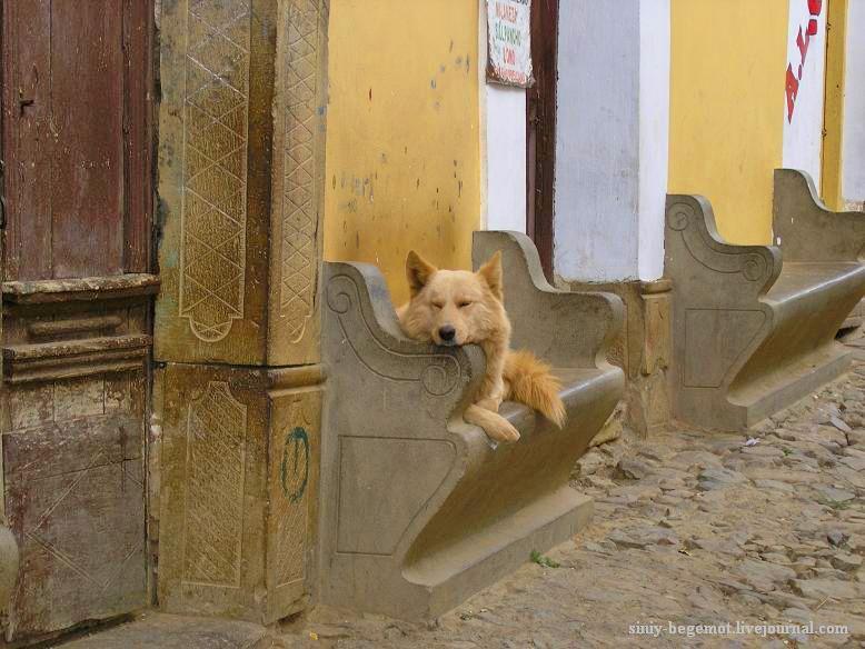 7 Спят усталые собаки