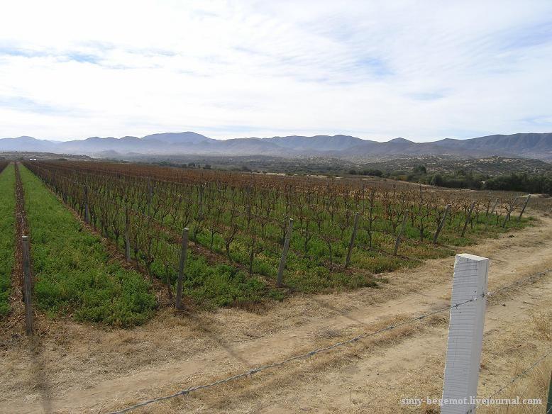 6 Виноградники