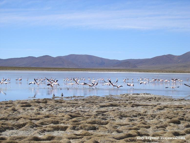 23 Фламинго в каждой лагуне