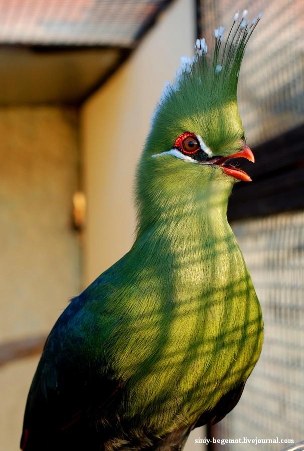 Парк птиц Фотографии Отзывы посетителей