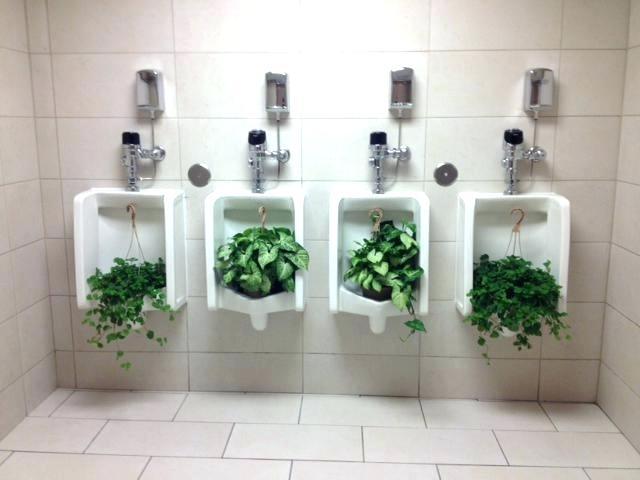 Переработка мочи позволяет получить удобрение для растений.