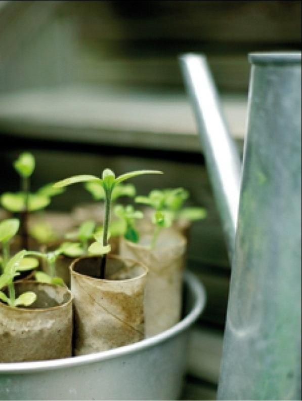 Используйте для проращивания саженцев картонки, оставшиеся от туалетной бумаги.