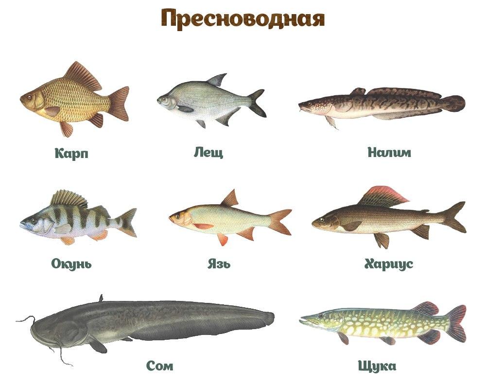 Из этой инфографики вы узнаете, как выбрать рыбу и не купить несвежий товар3