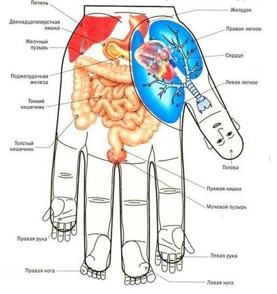 Воздействуем на органы с помощью точечного массажа