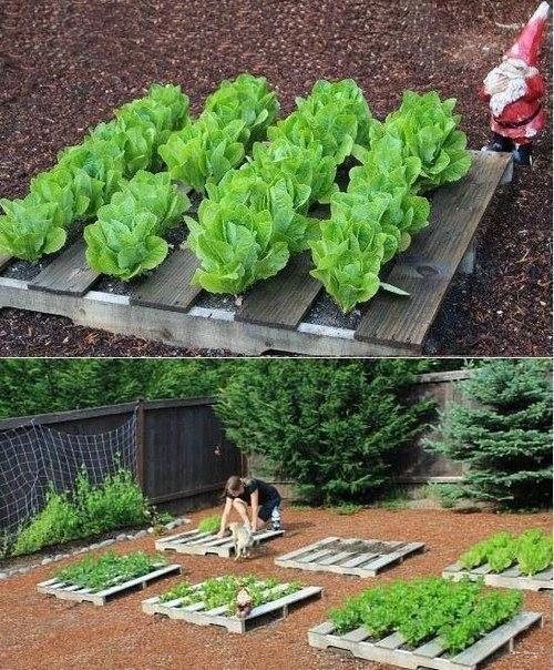 Идея выращивания зелени