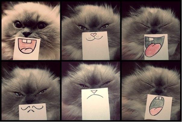 Эмоции кота