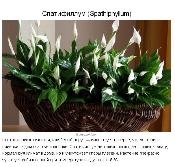 5 растений для идеального микроклимата в доме