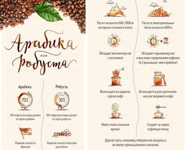 Гид по кофе